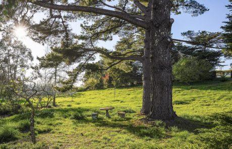 850 Lynch Road Petaluma Horse Property 18