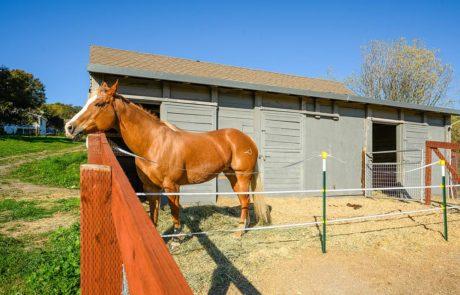 850 Lynch Road Petaluma Horse Property 23