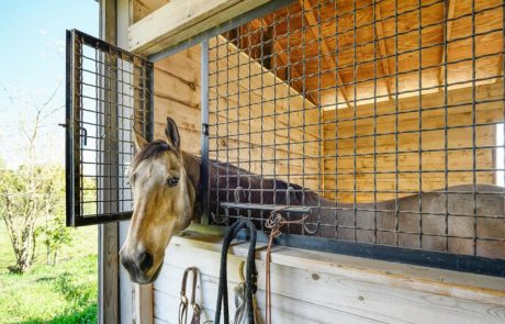 safety for your horses