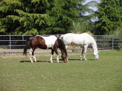 Santa Rosa Horse Property