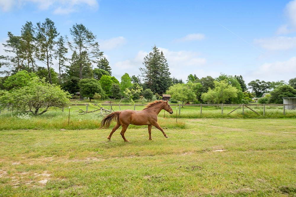 795 Edwards Lane Sebastopol Horse Property 30