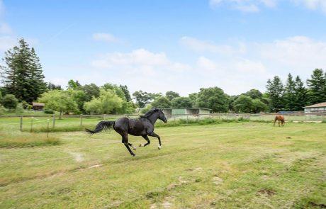 795 Edwards Lane Sebastopol Horse Property 05