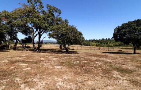 145 Lone Oak Lane Sebastopol Country Estate ZGE
